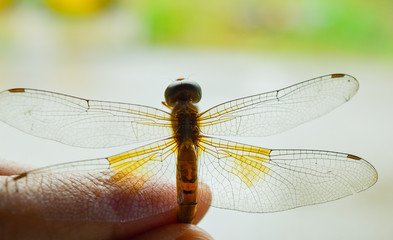 Dragonfly is dead