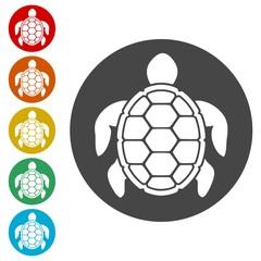 Turtle Icons set Flat Graphic Design - Illustration