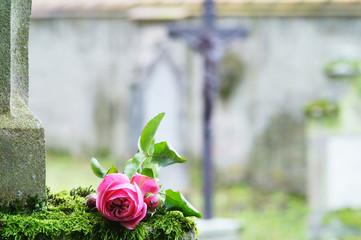 Friedhof, Allerheiligen, Allerseelen, Grab mit Rose, Kreuz, Sterbebild, Textraum, copy space