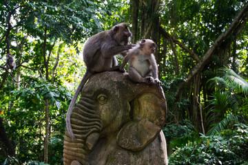 Monkeys on elephant sculpture, Ubud, Indonesia