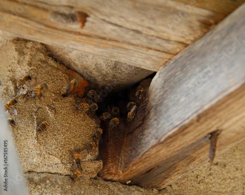 bienenstock von wilden bienen im dach stockfotos und. Black Bedroom Furniture Sets. Home Design Ideas
