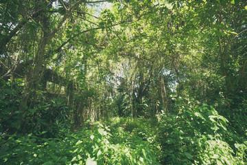 Tropical jungle rainforest background on Bali island, Indonesia.