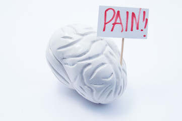 Anatomical model of brain with placard with inscription pain is on white background. Concept photo of headache pain symptoms and syndromes in brain and head in diseases and pathologies like migraine