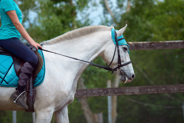 Girl rider trains the horse in the riding course in summer day