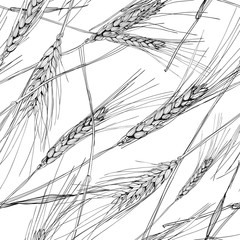 Vector seamless pattern with hand drawn ear of wheat. Black and white sketched illustration. Concept for agriculture, organic cereal products, harvesting grain, bakery, healthy food.