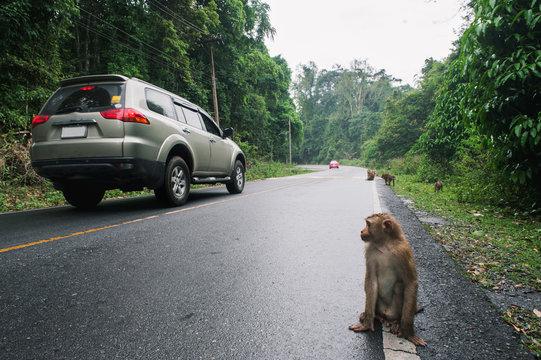 Monkey in Khaoyai National Park,Thailand
