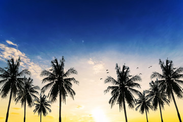 Coconut seaside landscape in the sunset (sunrise)