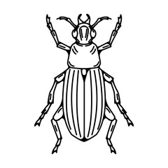 Beetle illustration isolated on white background.