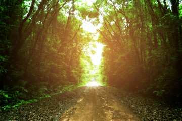 beautiful road in the forest with sunbeam. soft focus photo