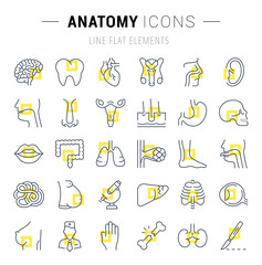 Set of Line Icons of Anatomy and Physiology