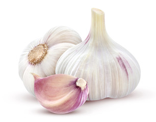 Garden Poster Aromatische Garlic on white background