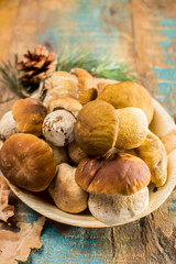 Tasty food - fresh porcini boletus oak mushrooms, high quality, ready to cook
