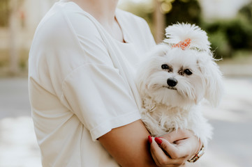 Concept of friendship and love. Woman is holding her cute maltese dog.