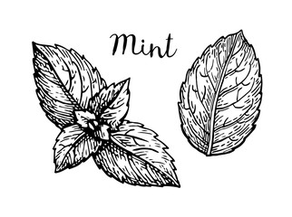 Ink sketch of mint leaves.