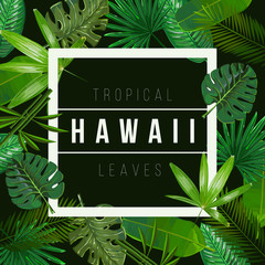 Vector Tropical leaves on black background.