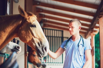 Veterinary medicine at the farm