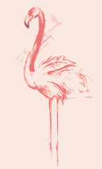 Color sketch of pink flamingos