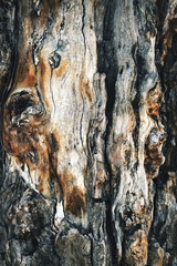 abstract detail of an old tree trunk