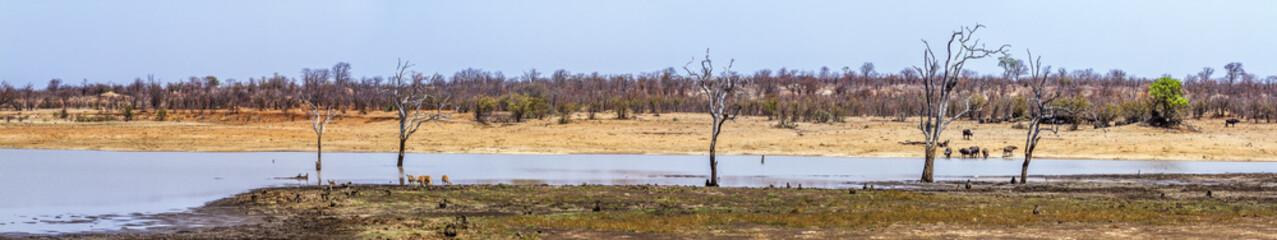 Poster Afrique du Sud Sable dam landscape in Kruger National park, South Africa