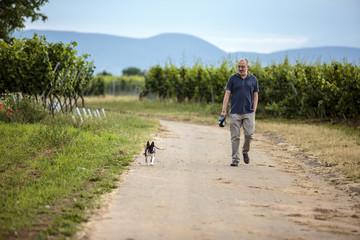 Man walking dog in the vineyards