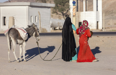 Muslim women wearing hijabs are leading donkey
