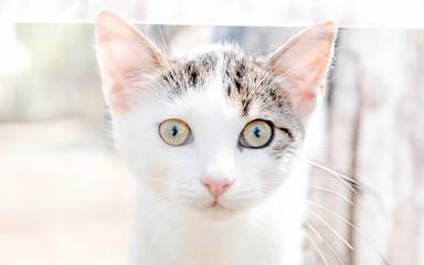 Portrait of little cat