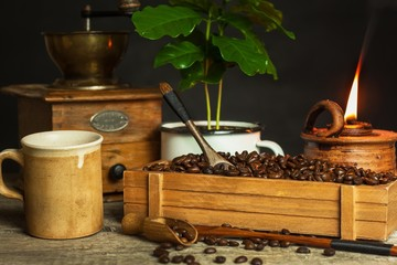 Coffee beans and coffee seedlings. Coffee trading. Crop production. Advertising the cafe.