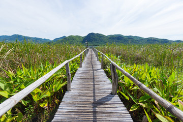 Wooden bridge and scenery