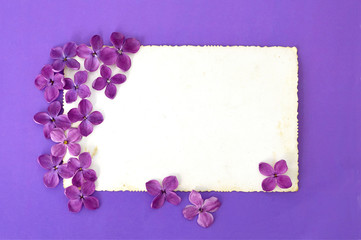 Blank greeting card and lilac flowers
