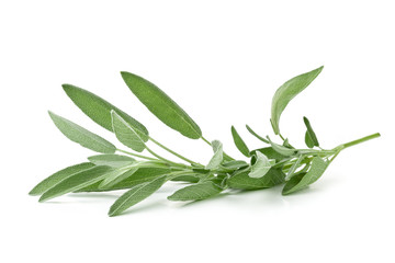 Photo sur Toile Condiment Single fresh harvested organic sage twig over white