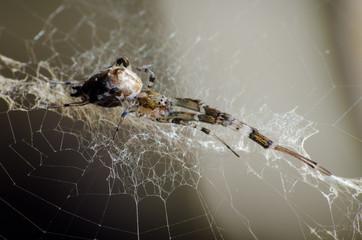 Linda aranha