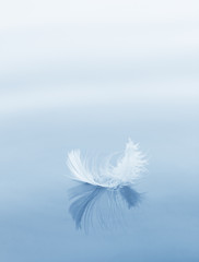 downy feather on a water surface