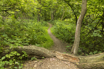Summer Hiking Trail / A hiking trail in the woods.