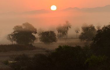 Jungle Sunrise Palm Tress