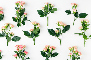 Set of branches of pink roses on white background