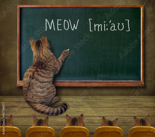 the cat teacher wrote on the blackboard meow stock photo and