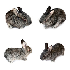 Photo of a small rabbits isolated on a white background