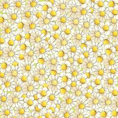 Background of sunny chamomiles