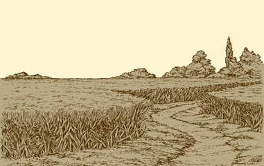 Vector summer landscape. A dirt path through fields of wheat