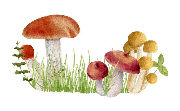 watercolor clipart of mushrooms