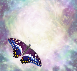 Butterfly messages border - beautiful multicoloured butterfly with open wings in bottom left corner of ethereal wispy energy formation background ideal copy space for messages