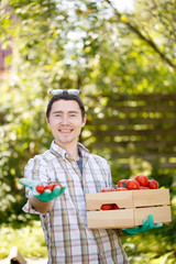 Farmer with box of tomato