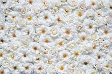 Beautiful white flower rose background
