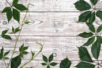Green leaves on white wooden table. Top view