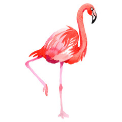 Sky bird flamingo in a wildlife by vectorr style isolated. Wild freedom, bird with a flying wings. Aquarelle bird for background, texture, pattern, frame, border or tattoo.
