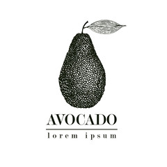 Vector hand drawn avocado. Tropical summer fruit retro style illustration. Detailed food drawing. Great for label, poster, print. Logo template.
