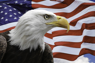 American Eagle with US Flag