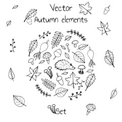 Hand drawn set of vector autumn elements. Includes foliage, berries, acorns, mushrooms, oak and maple leaves, rosehips and a hedgehog.