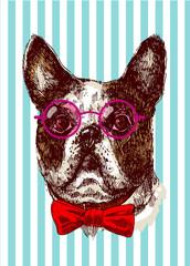 Hand drawn vector illustration bulldog. Sketch style dog.