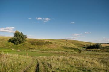 Meadow, green grass and blue sky, horizon